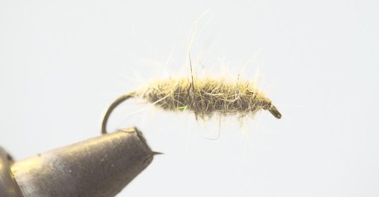 Walt's Worm